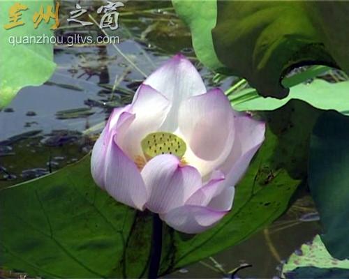 大西江镇:坚持生态立镇,建设美丽家园